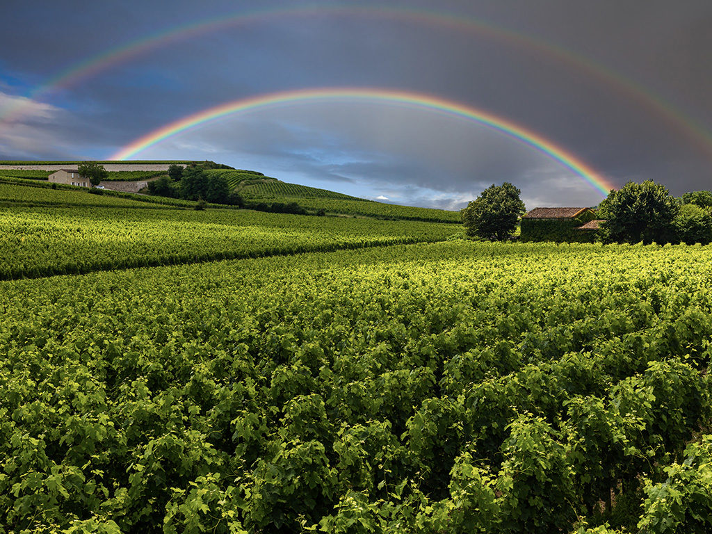 The Wines of Burgundy, Part One