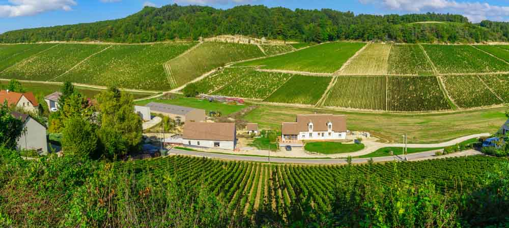 A Venerable Burgundian August Week