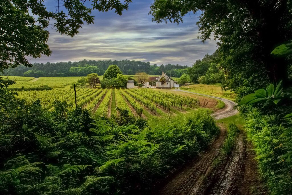 Bask in the Warmth of Beautiful Loire Valley White