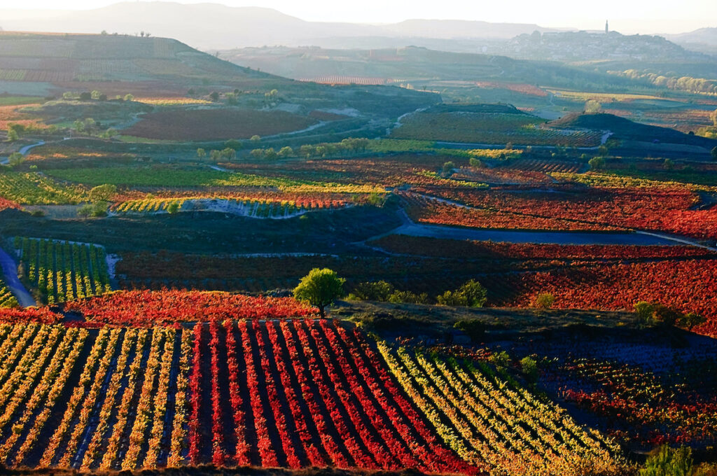 Bold Reds from Northern Spain  | 9/13 – 9/19/21